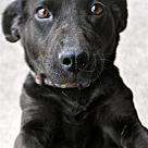 Adopt A Pet :: Linda E