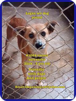 Chihuahua Mix Dog for adoption in Chapmanville, West Virginia - Slick