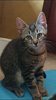 Bobby *ADOPTED!