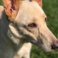 Adopt A Pet :: Nova - Fort Valley, GA