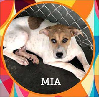 Adopt A Pet :: Mia  - Windsor, NC