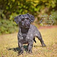 Adopt A Pet :: Benny - Fort Valley, GA