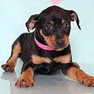 Adopt A Pet :: Bligh