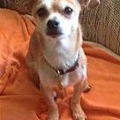 Adopt A Pet :: Jimmy M