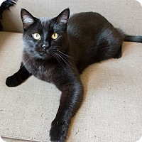 Adopt A Pet :: Townes - Chicago, IL