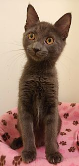Bluebell **adoption pending**