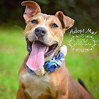 Adopt A Pet :: Jasmine - Fort Valley, GA