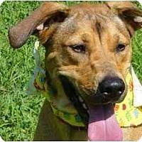 Adopt A Pet :: Sanders - Milwaukee, WI