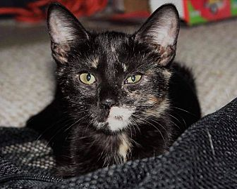 Adopt A Pet :: Nebula  - Toms River, NJ