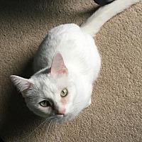 Adopt A Pet :: 3821 Evee - SE - Council Bluffs, IA