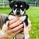 Adopt A Pet :: Snow White's Grumpy