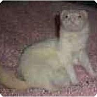 Adopt A Pet :: Clyde - Spokane Valley, WA