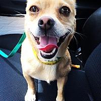 Adopt A Pet :: Peanut - Marina del Rey, CA