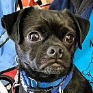 Adopt A Pet :: Earl *Adopt or Foster*