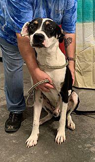 Adopt A Pet :: Clyde  - Henderson, NC