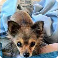 Adopt A Pet :: Leo - Houston, TX