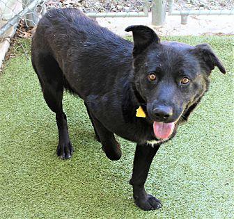 Adopt A Pet :: Kumani  - Germantown, TN