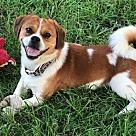 Adopt A Pet :: Otto
