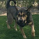 Adopt A Pet :: Mojo (TIA)