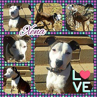 Adopt A Pet :: Xena  - Clarksville, TN