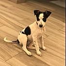 Adopt A Pet :: Tallulah