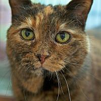 Adopt A Pet :: Dolly - St Louis, MO