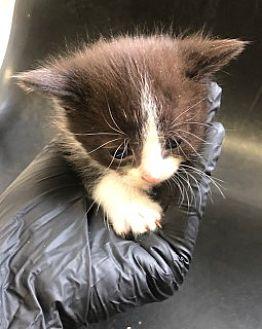 Adopt A Pet :: Mufasa  - Havelock, NC