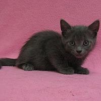 Adopt A Pet :: Blueberry - Redwood Falls, MN