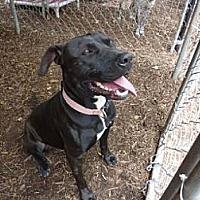 Adopt A Pet :: Cupcake - Fair Oaks Ranch, TX