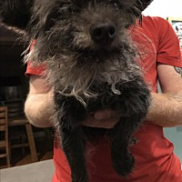 Adopt A Pet :: Rocky 2 (COURTESY POST) - Baltimore, MD