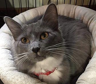 Adopt A Pet :: Nolan  - Northwood, NH