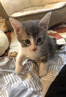 Adopt A Pet :: Cat-Astrophe  - Moose Jaw, SK