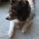 Adopt A Pet :: Mandee