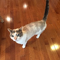 Adopt A Pet :: Desi (COURTESY POST) - Baltimore, MD