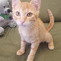 Adopt A Pet :: Yella - Saint Robert, MO