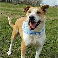 Adopt A Pet :: Blondie - N - Huntington, NY