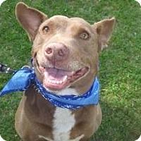 Adopt A Pet :: Gretsky - West Hills, CA
