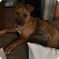 Adopt A Pet :: Chloe - Long Beach, CA