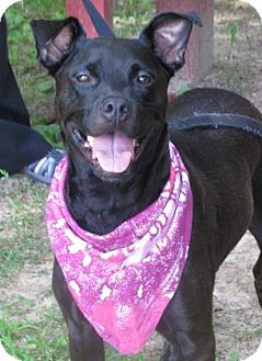 Labrador Retriever Mix Dog for adoption in Voorhees, New Jersey - Emma