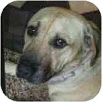 Adopt A Pet :: Ajax - Riverside, CA