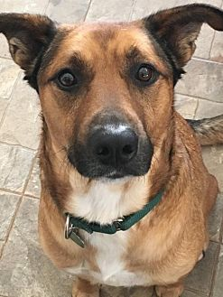 Shepherd (Unknown Type) Mix Dog for adoption in Halethorpe, Maryland - Lucky - ON HOLD - NO MORE APPLICATIONS