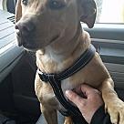 Adopt A Pet :: Nala