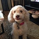 Adopt A Pet :: Blondie