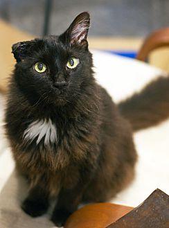 Adopt A Pet :: Lennox  - Troy, MI
