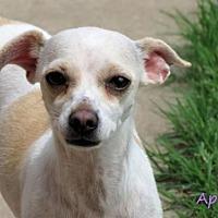 Puppies for Sale in Oklahoma City Oklahoma - Adoptapet com