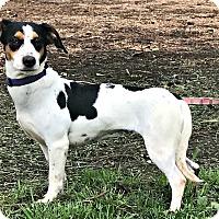 Adopt A Pet :: Pup-Pup - Starkville, MS