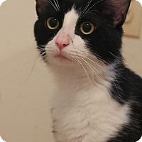Adopt A Pet :: Ben - Columbia, MD