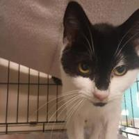 Adopt A Pet :: Orchid - New Freedom, PA