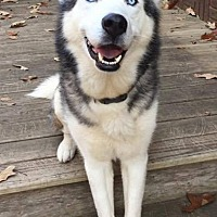 Adopt A Pet :: Orion - ON HOLD - NO MORE APPLICATIONS - Hewitt, NJ