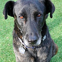 Adopt A Pet :: Captain - Memphis, TN